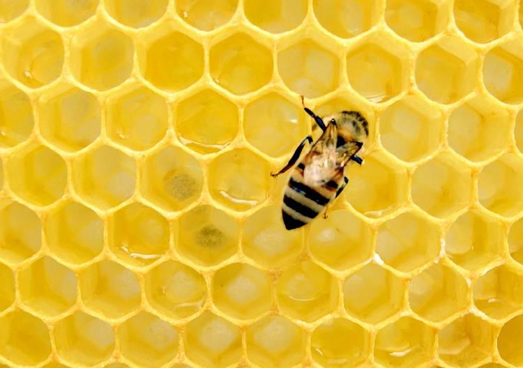Poznaj mleczko pszczele