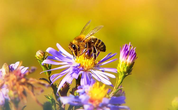 Poznałeś może jakie świetne właściwości wzbogacone jest mleczko pszczele?